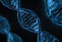 Diseñan el В«pen-driveВ» más eficaz hasta la fecha a partir de ADN