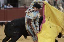 El Juli debuta como ganadero en Sevilla con una magnífica novillada del Freixo