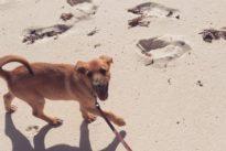 Providenciales, la isla paradisíaca del Atlántico que sirve de refugio a perros abandonados