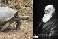 Charles Darwin, el científico que se comió 48 tortugas gigantes