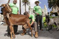 Podemos quiere que Canarias designe a los animales «seres sintientes»