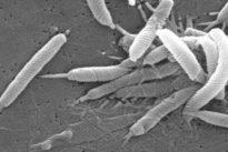 La erradicación de 'H. pylori' también reduce el riesgo de cáncer de estómago en mayores