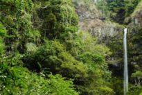 Los fondos pactados en la Cumbre de Río de 1992 frenaron la disminución de la biodiversidad un 29%