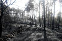 El Gobierno declara a Galicia zona de emergencia tras la ola de incendios