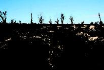 Los incendios de Portugal ponen en alerta a los pinos de Castilla y León frente al nematodo