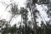 La meta del Plan Forestal para 2039:reducir a 10.000 las hectáreas ardidas