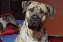 Malabar, el perro canario campeón del mundo a sus 16 meses