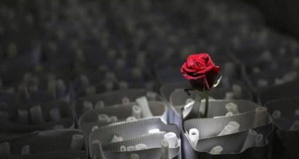 Las Mejores Frases Bonitas Para San Valentín Noticias De
