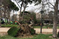 Un niño de 5 años, herido grave tras caerle encima un árbol en San Sebastián