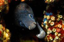 Las Áreas Marinas Protegidas serán inhabitables para la mayoría de especies en 80 años