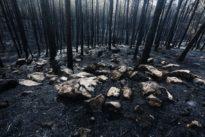 El consenso imposible contra los incendios