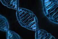 Una terapia génica trata y previene la adicción a la cocaína