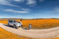 El desierto que, de repente, se transforma en una alfombra de flores