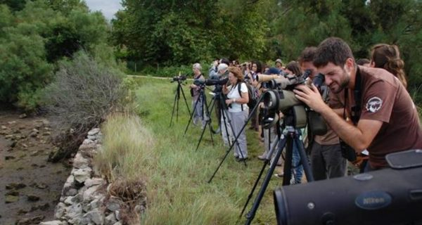 Un código ético para la observación de aves