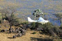 La sabana, el ecosistema que probaría que la integración del ganado y la vida silvestre funciona