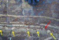 ¿Es este el ser vivo más antiguo de la Tierra… o solo son rocas?