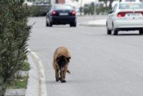 Las principales causas del abandono animal en España
