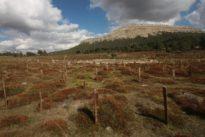 La verdadera historia del cementerio burgalés de «El bueno, el feo y el malo»