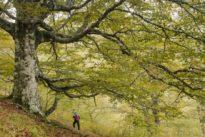 Nueve bosques de otoño imprescindibles en España