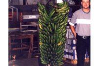 Los récords Guinnes hechos en Canarias