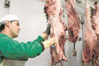 Medio centenar de veterinarios controlan la calidad sanitaria de la carne de caza
