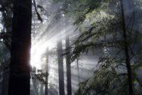 El bosque mediterráneo aumenta su superficie, pero está cada vez más amenazado
