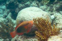 Advierten de la poca efectividad de la red europea de áreas marinas protegidas