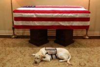 La conmovedora imagen de Sully, el perro de servicio de George H. W. Bush que lo acompañó hasta el final