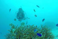 Una enfermedad bacteriana se extiende con rapidez por los arrecifes de la costa sur de Florida