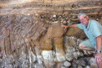 Descubren una «supercarretera» de gusanos de hace 500 millones de años