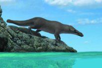 Hallada una antigua ballena con cuatro patas capaz de caminar y nadar