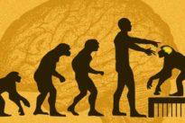 Científicos chinos ponen genes del cerebro humano en monos y se vuelven más listos