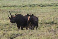 Los mamíferos reducirán su tamaño en un 25% en los próximos 100 años debido a la acción del ser humano