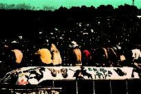 Woodstock necesita otro milagro