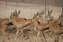 Un año seco pone precio a un millar de animales silvestres para evitar que mueran de hambre