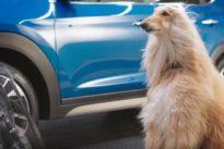 Consejos para reducir el calor del coche sin poner el aire acondicionado