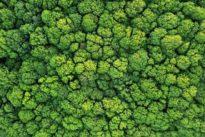 ¿Hemos ignorado hasta ahora que los bosques son superorganismos?