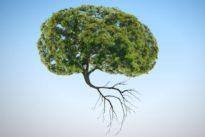 ¿Son las plantas inteligentes y conscientes de sí mismas?