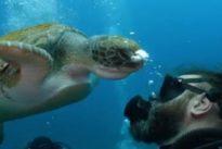 Vídeo: la tortuga de Canarias que demuestra «empatía»