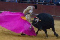 Los ángeles de los toreros serán homenajeados en un festival en Vistalegre